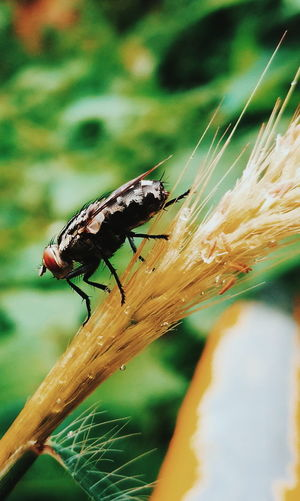 Fly Insect Photography Macro Photography Huaweiphotography HuaweiP9Photography