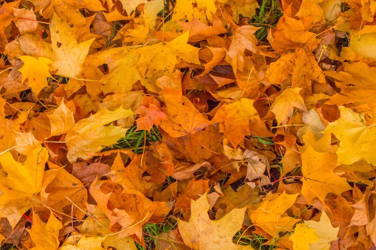 Autumn Change Golden Moment Growth Herbst Herbstblätter Herbstfarben Herbststimmung Jahreszeit Laub Leaf Leaves Nature Orange Season  Vergänglichkeit Yellow Yellow Leaves Paint The Town Yellow