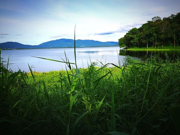 Water Lake Nature Outdoors Landscape Beauty In Nature Grass Tranquility Tranquil Scene Green Color Scenics Growth Day No People Sky Dam