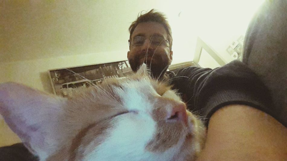 Tomcat HugoTheTomcat Meow🐱 Sleeping Cat Humans And Animals At Home That's Me! Relaxing Chilling