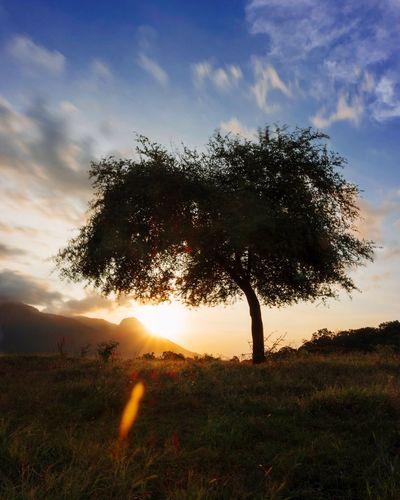 Somewhere in Baluran Tree Sky Sunset Nature Landscape Grass Cloud - Sky Outdoors Savana Baluran First Eyeem Photo