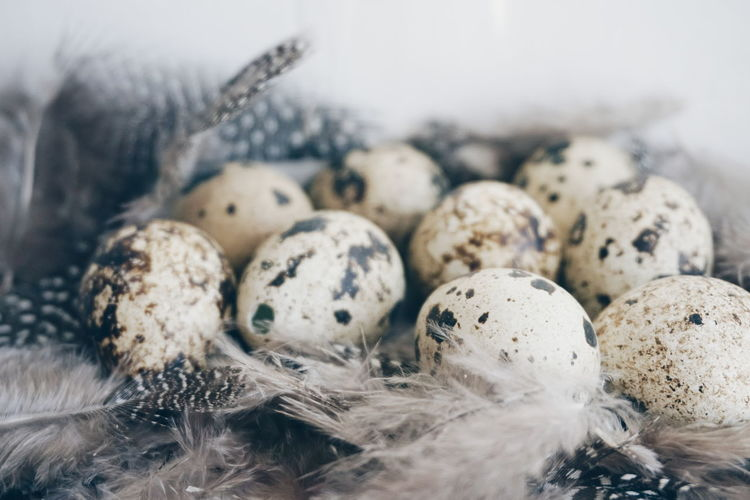 Close-Up Of Easter Eggs With Feathers