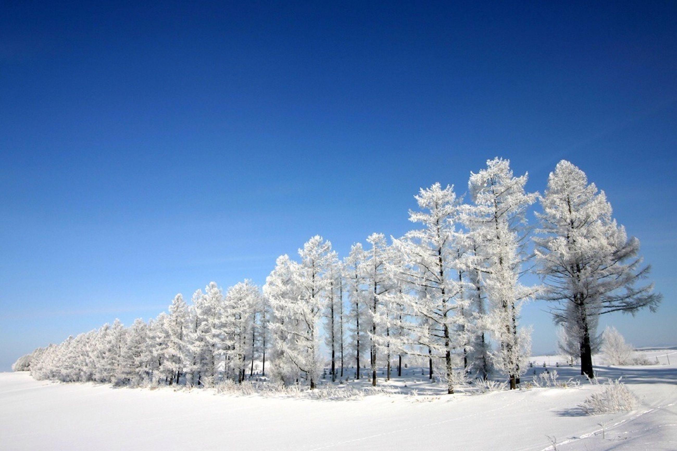 snow, winter, cold temperature, blue, clear sky, season, tree, white color, covering, tranquility, nature, tranquil scene, beauty in nature, copy space, weather, landscape, scenics, frozen, low angle view, sunlight