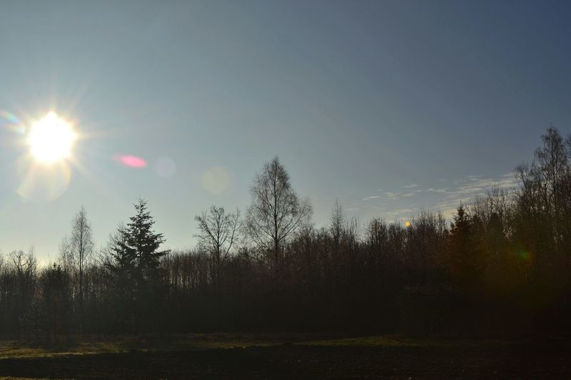 Photo taken with Nikon D3100 Landscape Lithuania Trees Hugging A Tree TreePorn Sky And Clouds Sun_collection Forest Sun