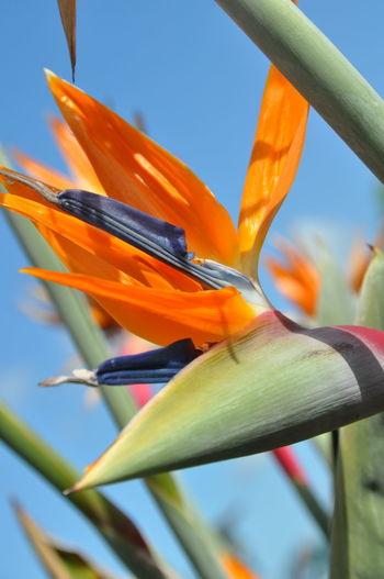 Close-up of orange flowering plant against sky