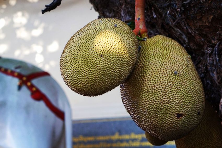 Tree Close-up Outdoors No People Nature Branch Fruit Jackfruit Tropical Plants Tropical Fruit Thai Fruit