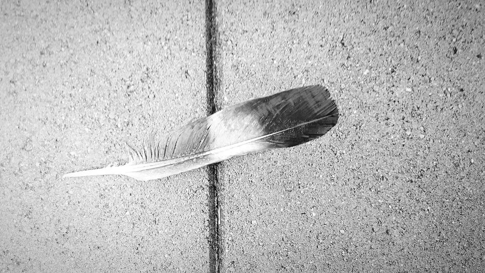 This is what I found while taking a Walkon a Rainy Afternoon. just on the Streets a Bird losts his Property Shades Of Grey Feather