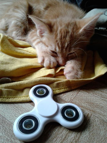 Indoors  Domestic Cat Directly Above Animal Themes Close-up Fidget Spinner Tired! Kitten Photography Kittens Lover 😻🐱