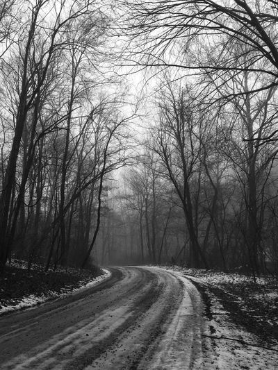 Cold Temperature Fog Forest Forest Road Landscape Nature No People Outdoors Road Snow The Way Forward Tranquil Scene Tree Winter