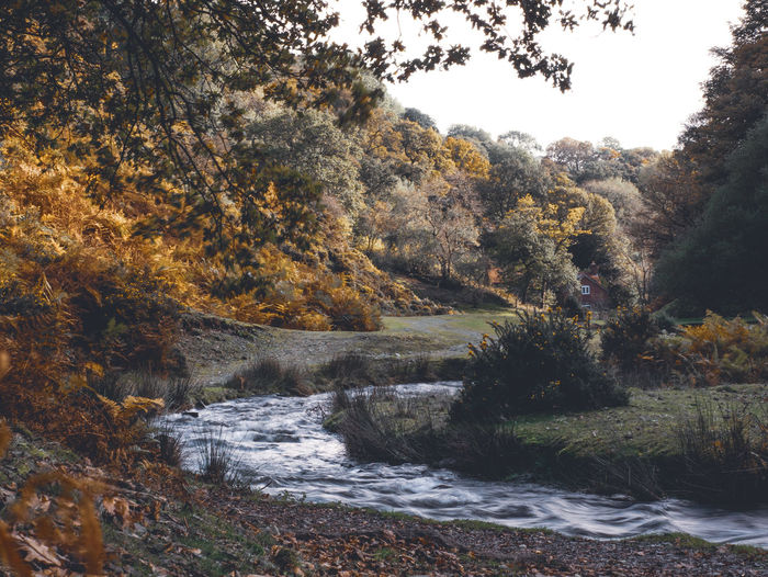Scenic view of river amidst trees during autumn