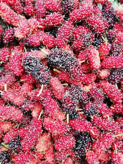Fruit Mulberry Red Background Freshness Raw Food Backgrounds Red Full Frame Textured  Close-up Berry Fruit