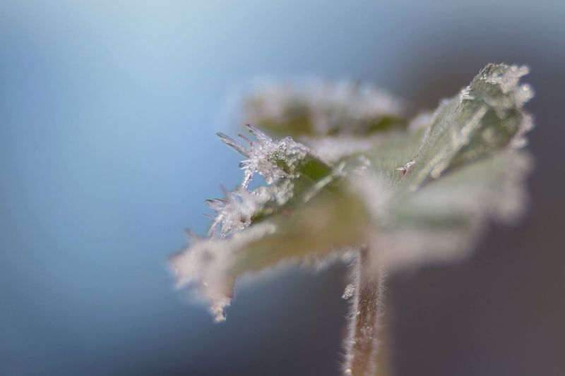 edgy Frost Frosty Mornings Macro_collection Macro Nature Macro Beauty Oaktreeshutterbug Tomate_pauline Lensbaby Edge 50