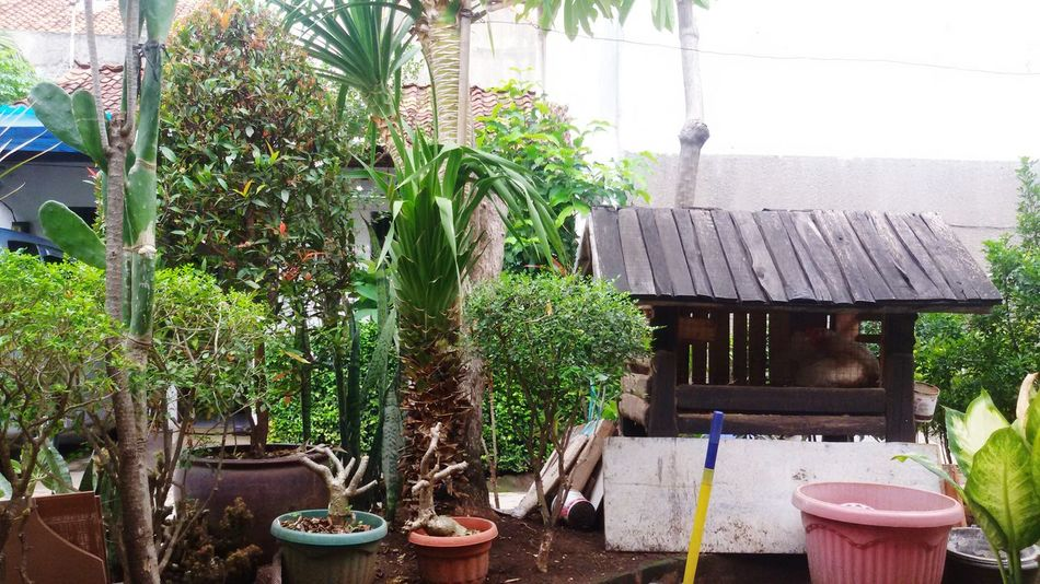 Urban Gardening Chickens Are Pets