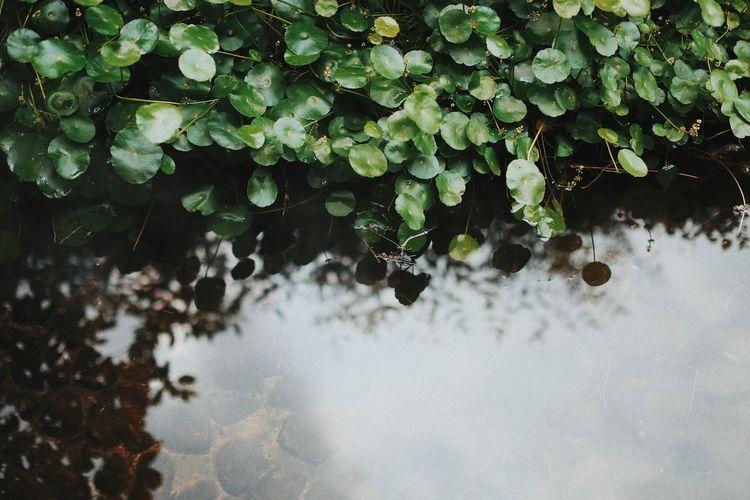High angle view of raindrops on plants