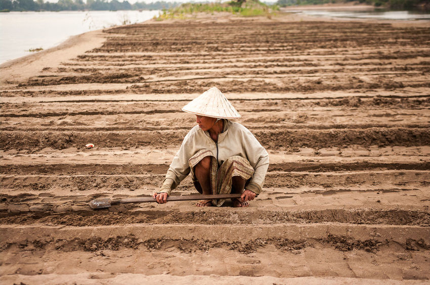 agriculture Agriculture Agriculture ASIA Cultivated Land Farm Field Fields Food Freshness Green Ground Laos Mekong People People Photography People Watching Plantation Plants Sand Water Woman