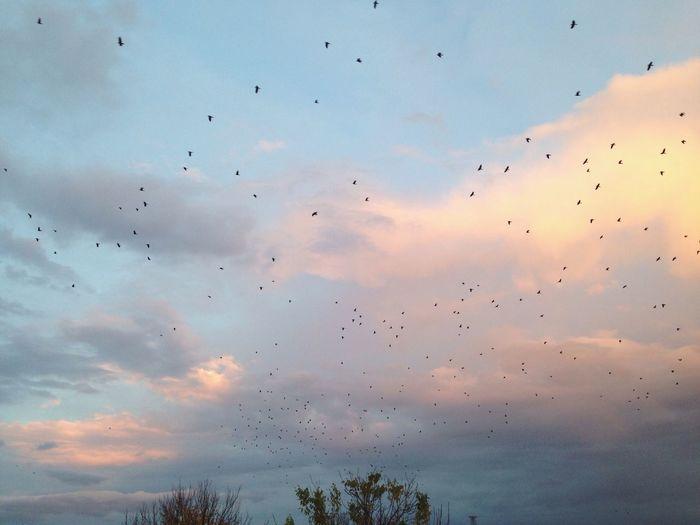 Sky Nature Automne