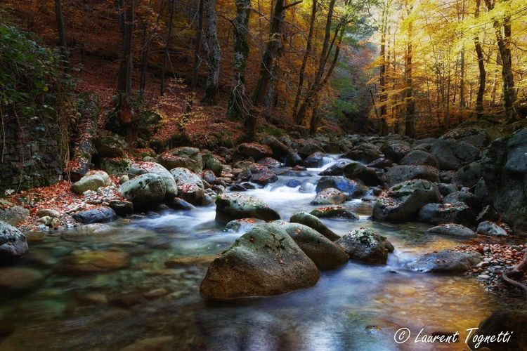 Forest Water Tree Flowing Water Beauty In Nature Land Scenics - Nature Plant Rock Flowing Nature Long Exposure River Stream - Flowing Water Vizzavona Autumn Autumn colors Autumn🍁🍁🍁 Automne Autumn Leaves