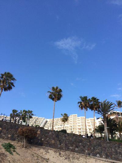 Fuerteventura Hotel On Coastline Palm Trees Blue Sky Sommer
