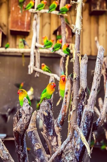 Beautiful Colors Birds Bird Animals In The Wild Animal Themes Day Outdoors Focus On Foreground No People One Animal Beauty In Nature Nature Animal Wildlife