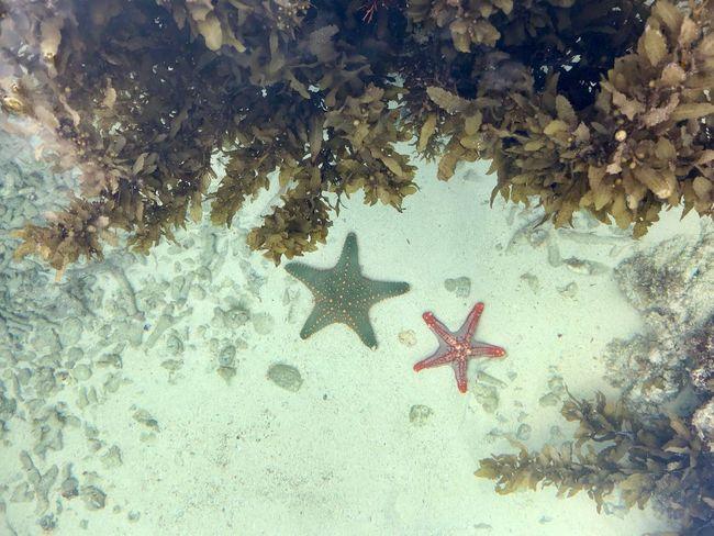 Starfish  Sea Life Underwater Animals In The Wild Animal Themes Nature Shark