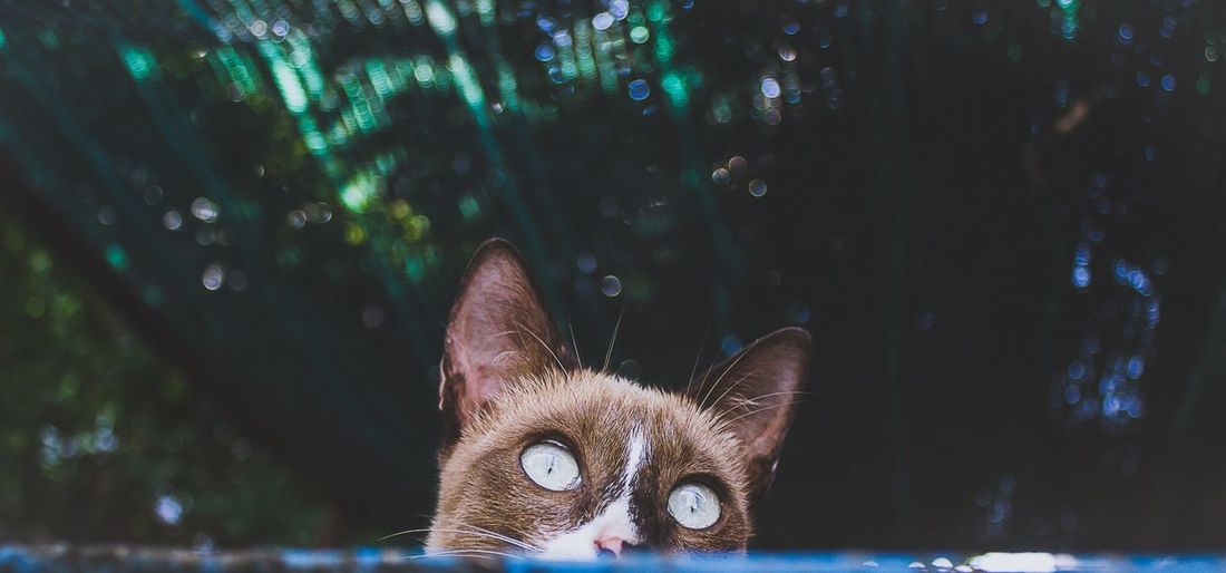 Close-up portrait of cat against trees