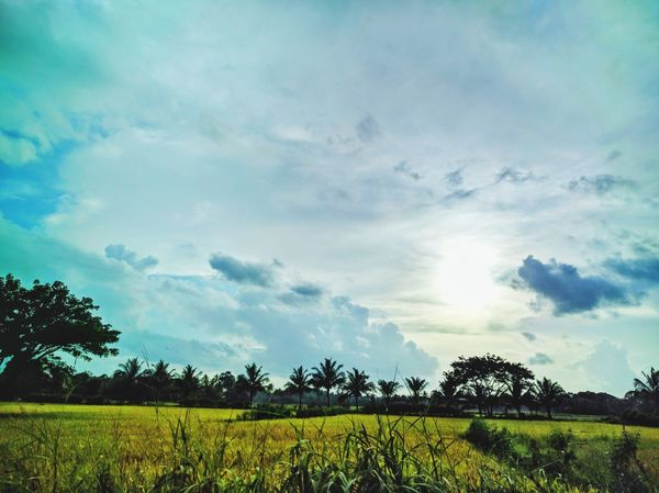 Kerala❤️💗 Tranquil Scene Tranquility Tree Growth Scenics Landscape Field Beauty In Nature Plant Sunlight Nature Sky Sun Rural Scene Agriculture Cloud - Sky Day Outdoors Green Color Solitude Majestic Hello World Nexus6pphotography EyeEm Best Edits Nexus6P The Great Outdoors - 2017 EyeEm Awards