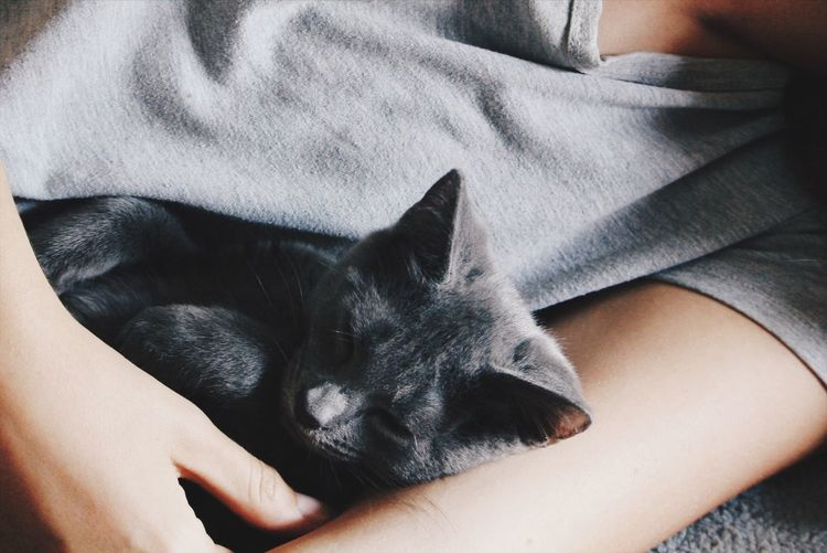 Low section of person with cat lying on woman