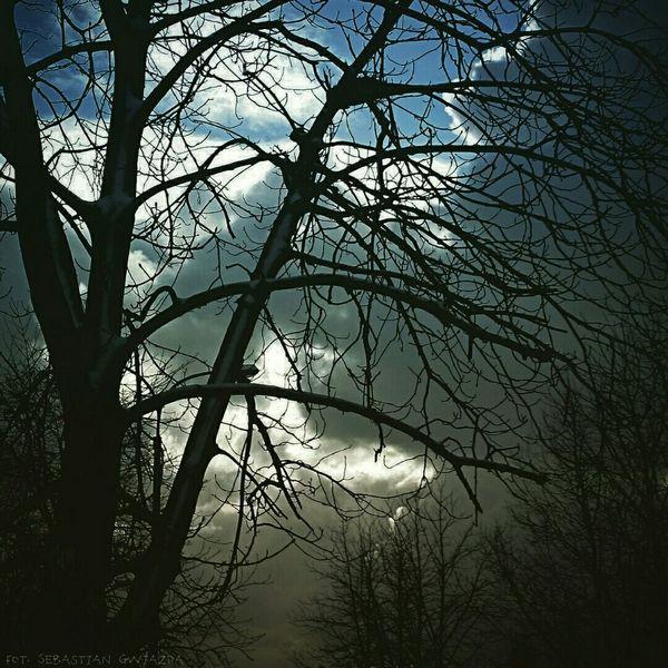 Jastrzębie - Zdrój In the Dark Forest