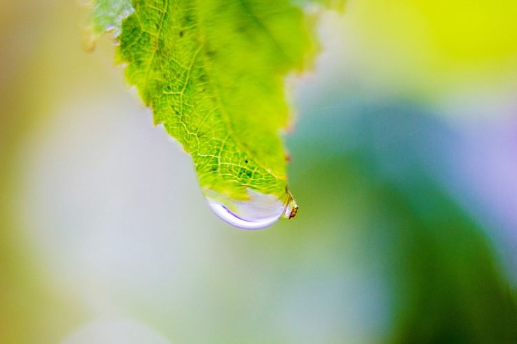 Green Color Water Close-up Belarus Nature Belarus Forest Autumn Macro Macro Photography Freshness Day Nature Leaf Blob Drop