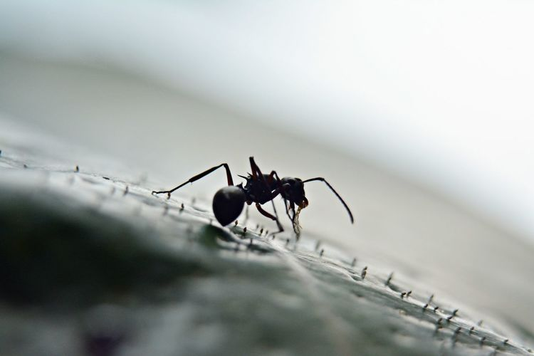 Close-Up Of Ant On Surface