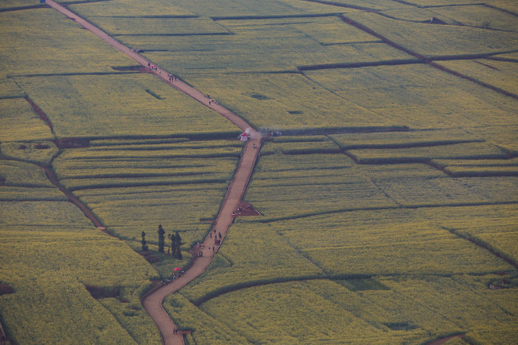 Landscape Environment No People Rural Scene Nature Field Plant Day High Angle View Agriculture Scenics - Nature Land Growth Beauty In Nature Tranquil Scene Pattern Aerial View Farm Full Frame Tranquility Outdoors