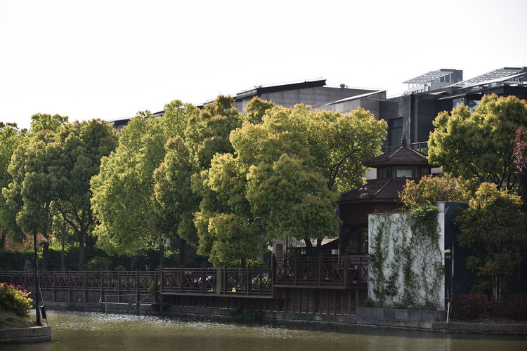 Plants by river against building against clear sky