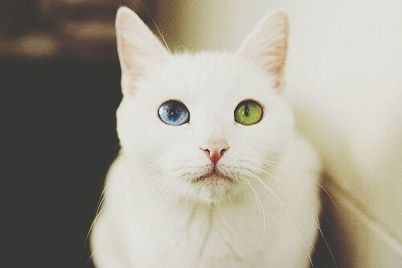 Cat Eyes Wonderful Magic ✨