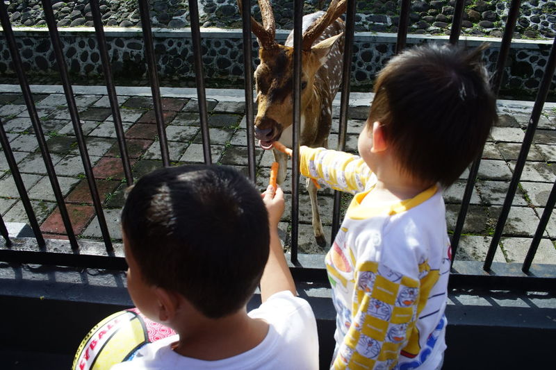 Feeding the deer. INDONESIA Human Interest Human Interest Street Photography Children Photography Photography By @jgawibowo Arif Wibowo Photoworks Shot By @jgawibowo Child Childhood Two People Males  Boys Adult Rear View