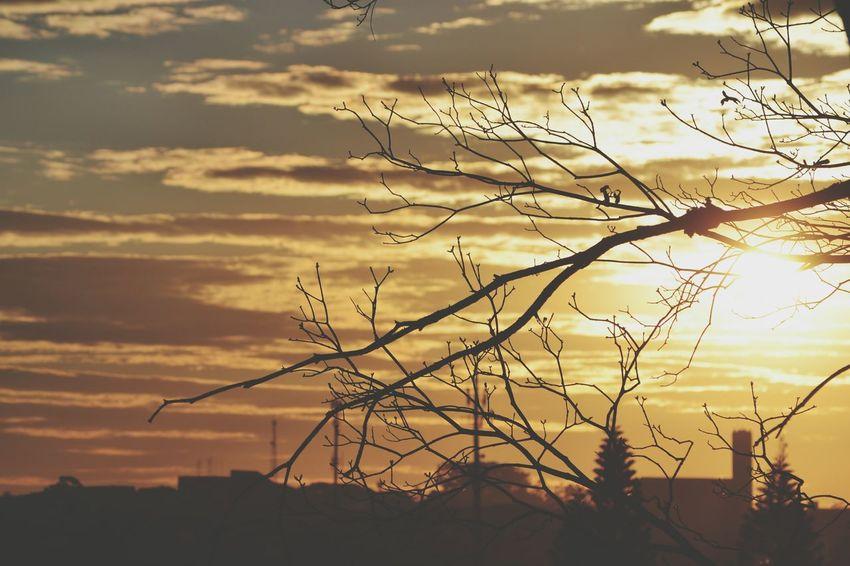 EyeEm Best Shots EyeEm Nature Lover Landscape 43 Golden Moments Sunset Nature Shadows & Lights Yellow Documentary Eye4photography  Lands EyeEmBrasil EyeEm Gallery TheWeekOnEyeEM