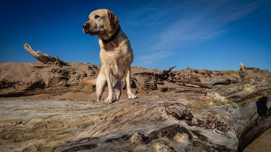 Dog on rock against sky
