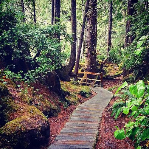 Paths through