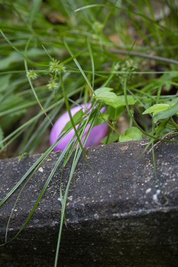 Purple Easter