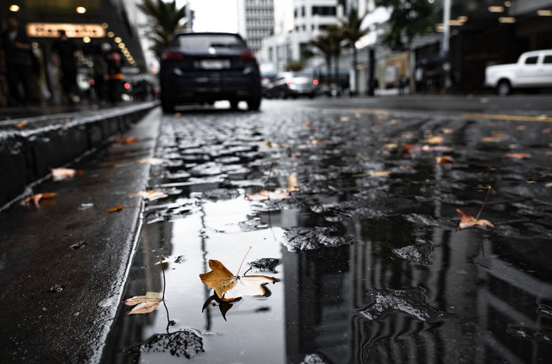 Transportation Mode Of Transportation City Motor Vehicle Car Street Road Wet Land Vehicle Water Nature Focus On Foreground Architecture Rain Day No People Leaf Plant Part Outdoors Rainy Season Surface Level Change Fall Autumn Autumn Leaves Yellow Leaves Reflection Building Stop