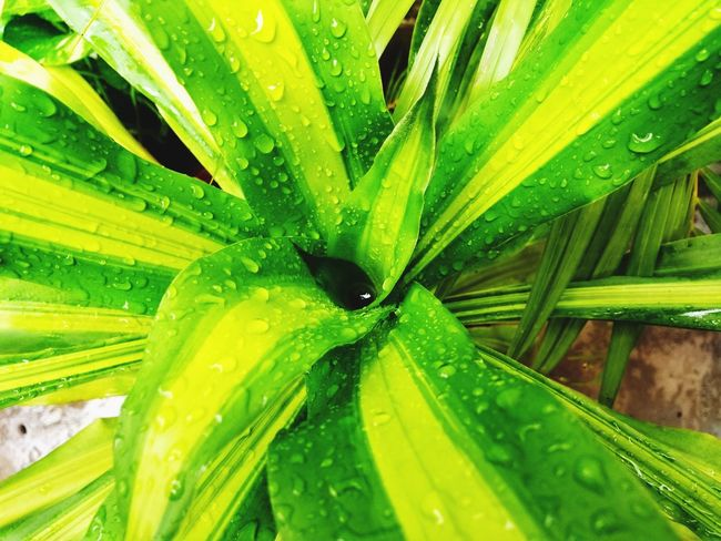 Green Color Leaf Nature Close-up No People Growth One Animal Plant Animal Wildlife Outdoors Day Animals In The Wild Animal Themes Beauty In Nature Freshness Let's Go. Together.