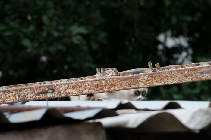 Looking At Camera Cat Close-up Damaged Day Focus On Foreground Girder Metal Nature No People Outdoors Rusty Selective Focus