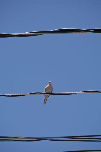 Bird Bird Photography EyeEm Birds Wires In The Sky Electric Wires