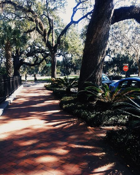 Savannah Travel Photography Traveling Savannah Georgia Savannah Tree Tree Trunk Nature Sunlight Growth Shadow Outdoors Day Beauty In Nature Branch No People Sky