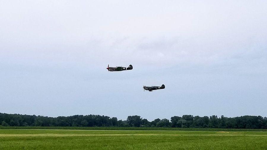 P-40 Warhawks