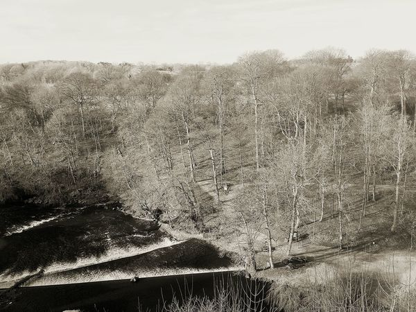 Black And White Photography River Nidd Knaresborough Beautiful Nature Trees Wintry Trees