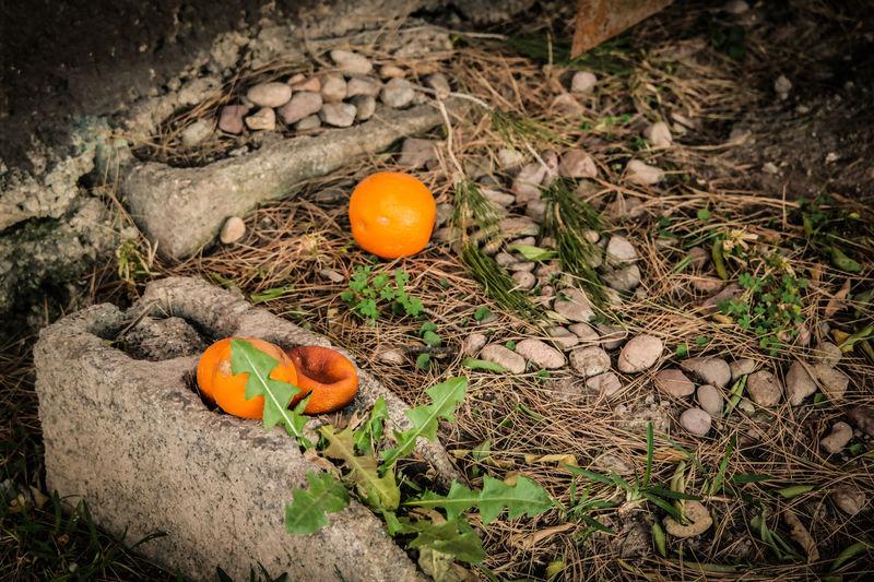 Joven Viejo simplemente vemos la juventud y el pasar de los años Naranja Vegetacion Cam Reset Fotografia