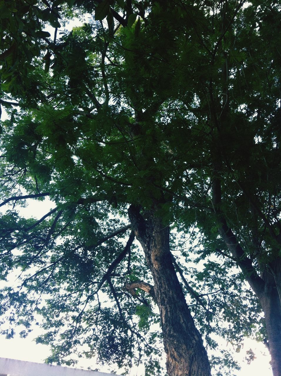tree, low angle view, branch, nature, growth, day, tree trunk, forest, no people, beauty in nature, tranquility, outdoors, sky