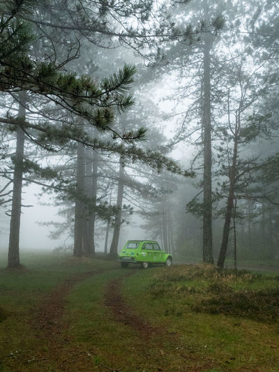 A green car in the woods on a foggy day in Tara National Park, Serbia. Green Car Serbia Tara National Park Beauty In Nature Day Environment Field Fog Forest Growth Land Land Vehicle Mode Of Transportation Motor Vehicle Nature No People Non-urban Scene Outdoors Plant Road Trip Serbianature Tranquility Transportation Tree WoodLand
