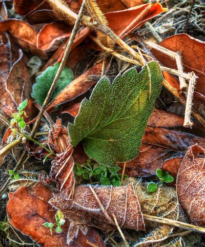Early Winter Green Leaves EyeEm Nature Lover
