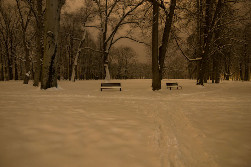Bench Night Scene Path Bare Tree Beauty In Nature Branch Cold Temperature Nature Night No People Outdoors Scenics Snow Tranquility Tree Tree Trunk Winter Winter Park